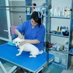 90220054_1_644x461_recrutam-medici-veterinari-pentru-anglia-alba-iulia[1]